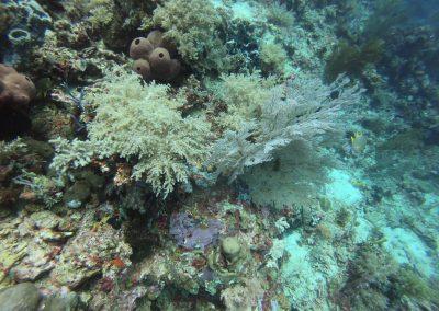 Tauchen bei Menjangan Island