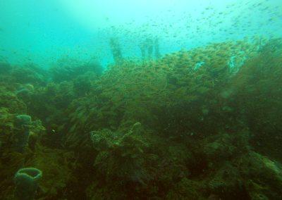 Tauchen in Menjangan Island