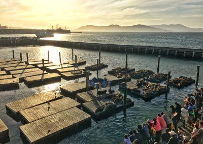 Die Seehunde am berühmten Fisherman's Warf, Pier 39