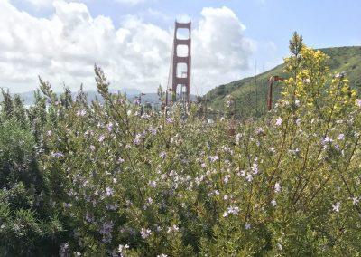 Impression: Bridge