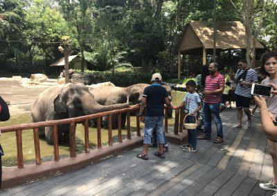 Bananen für die Elefanten