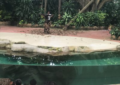 Regenwaldvorführung