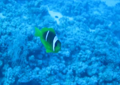 Nemo not amused ;-)