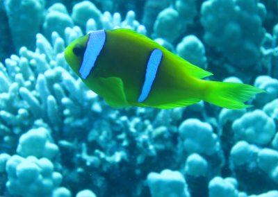 Nemo :-)