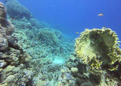 Coral Garden Riff am Hausriff