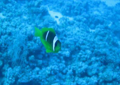 Nemo is not amused ;-)